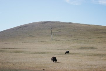 mongolia-175