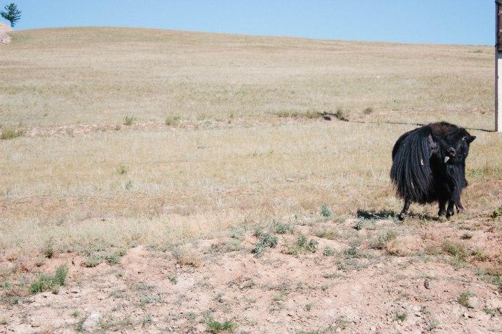 mongolia-179