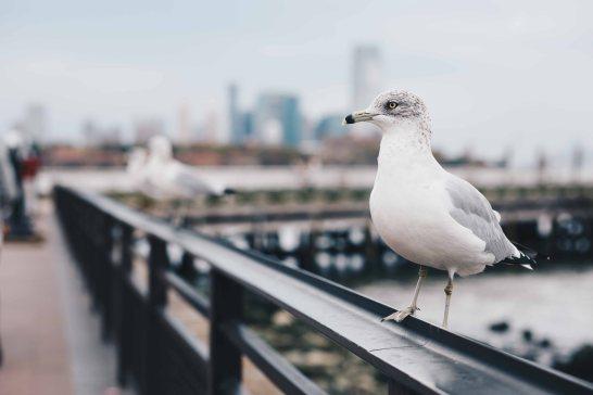 newyork-13