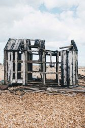 dungeness-86
